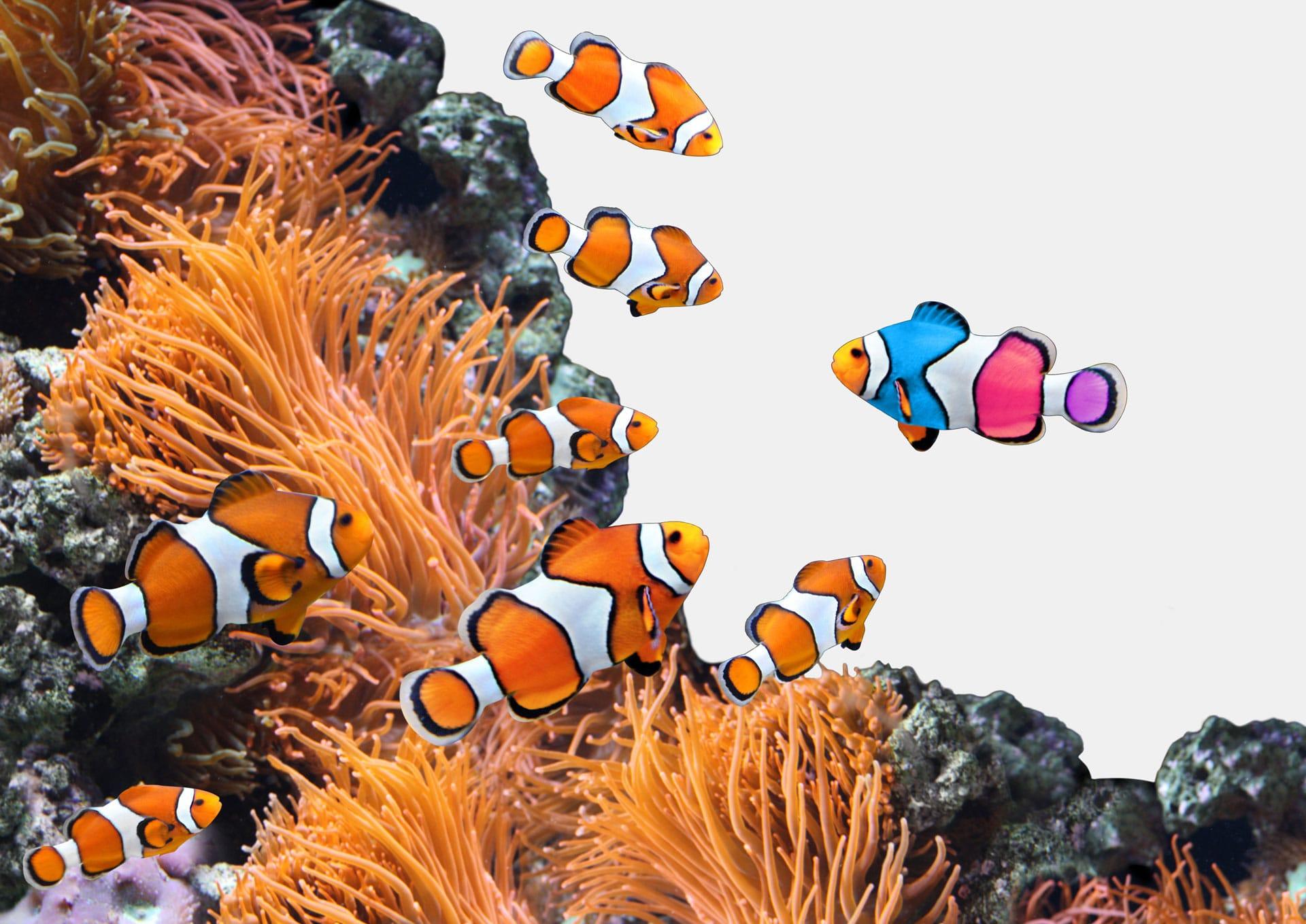 Webseiten Clownfische